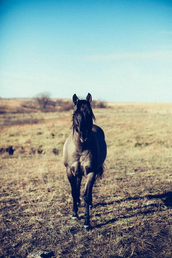 Dan Brown, Kapitol Photography, Road Trip, West