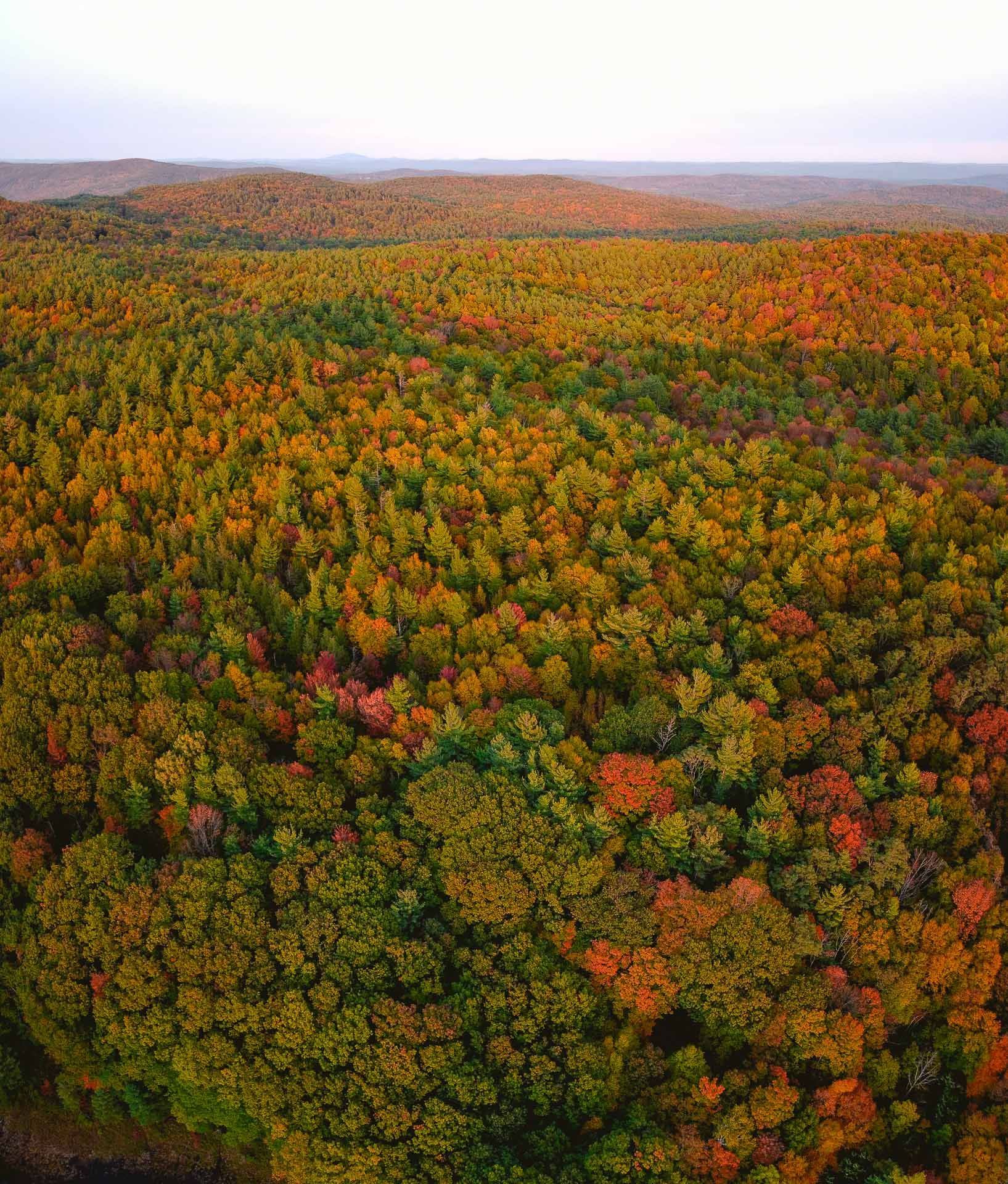 An aerial view of fall foliage in Western Massachusetts